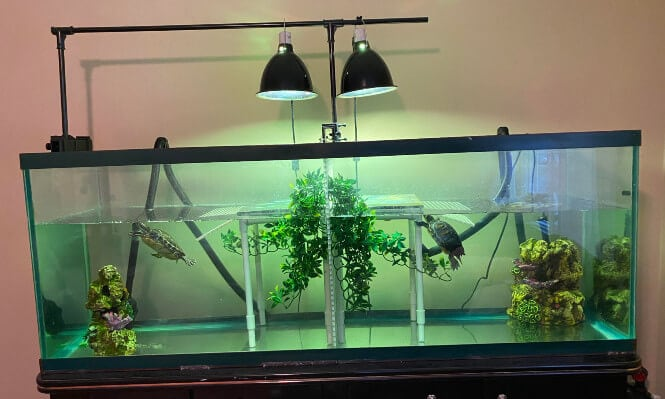 A turtle tank with two basking lamps