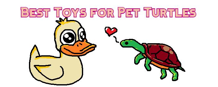 toys for pet turtles header