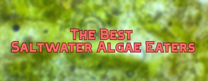 saltwater algae eaters header