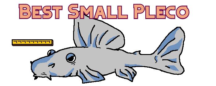 small pleco header