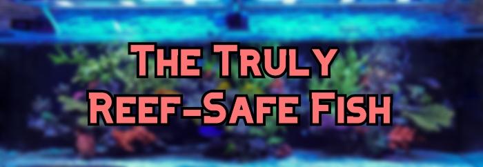 reef safe fish header