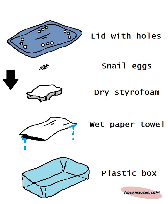 how to make a DIY egg incubator