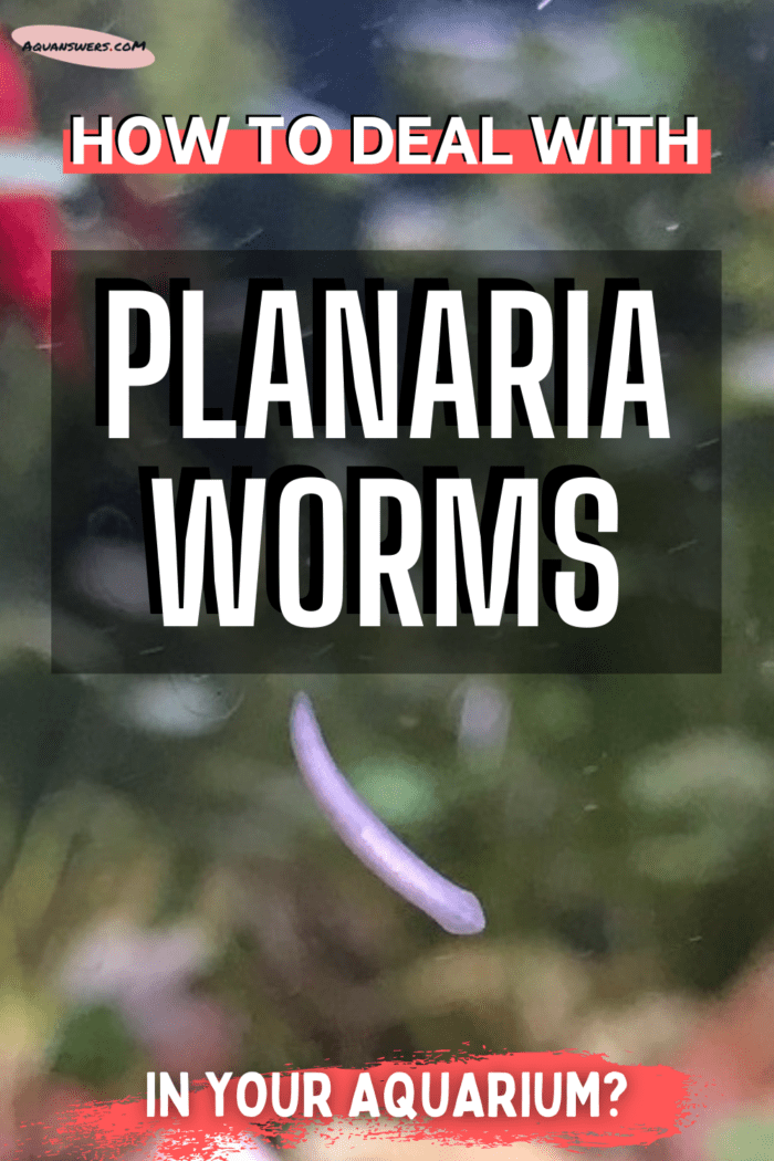 planaria-worms-poster