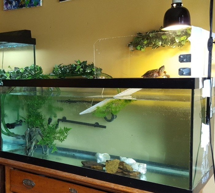 turtle basking area with uvb lights