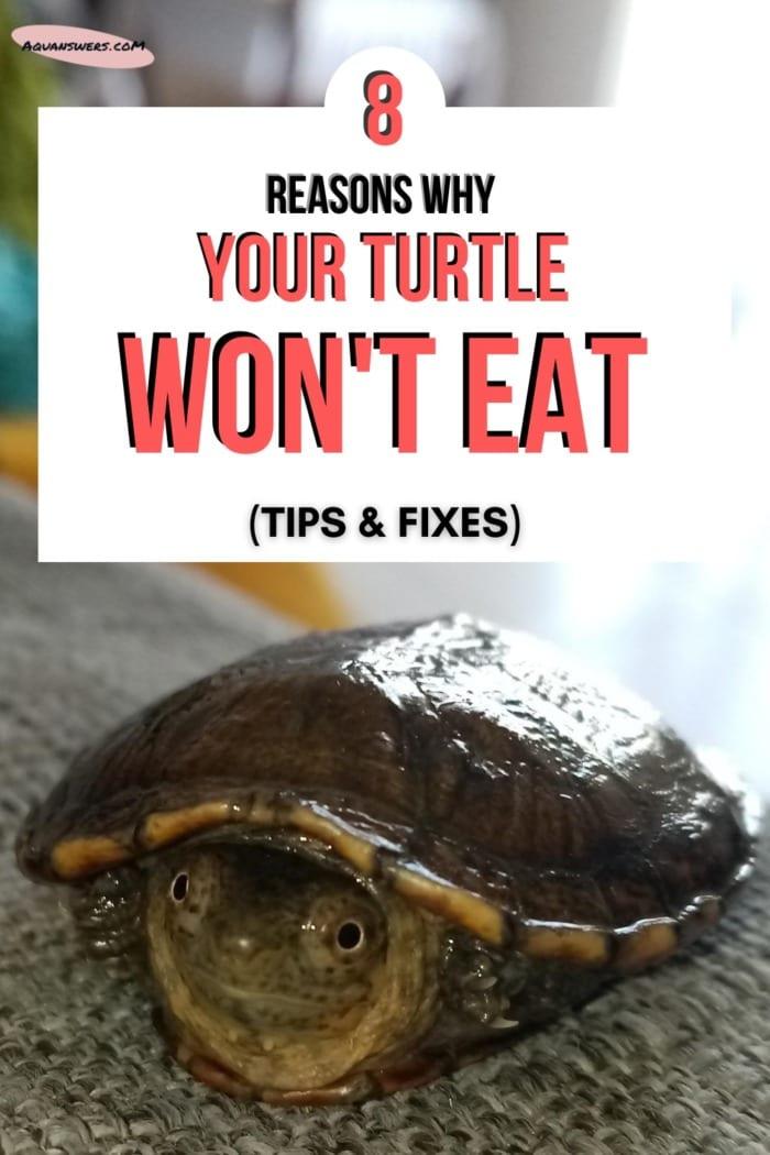 turtle wont eat Pinterest poster